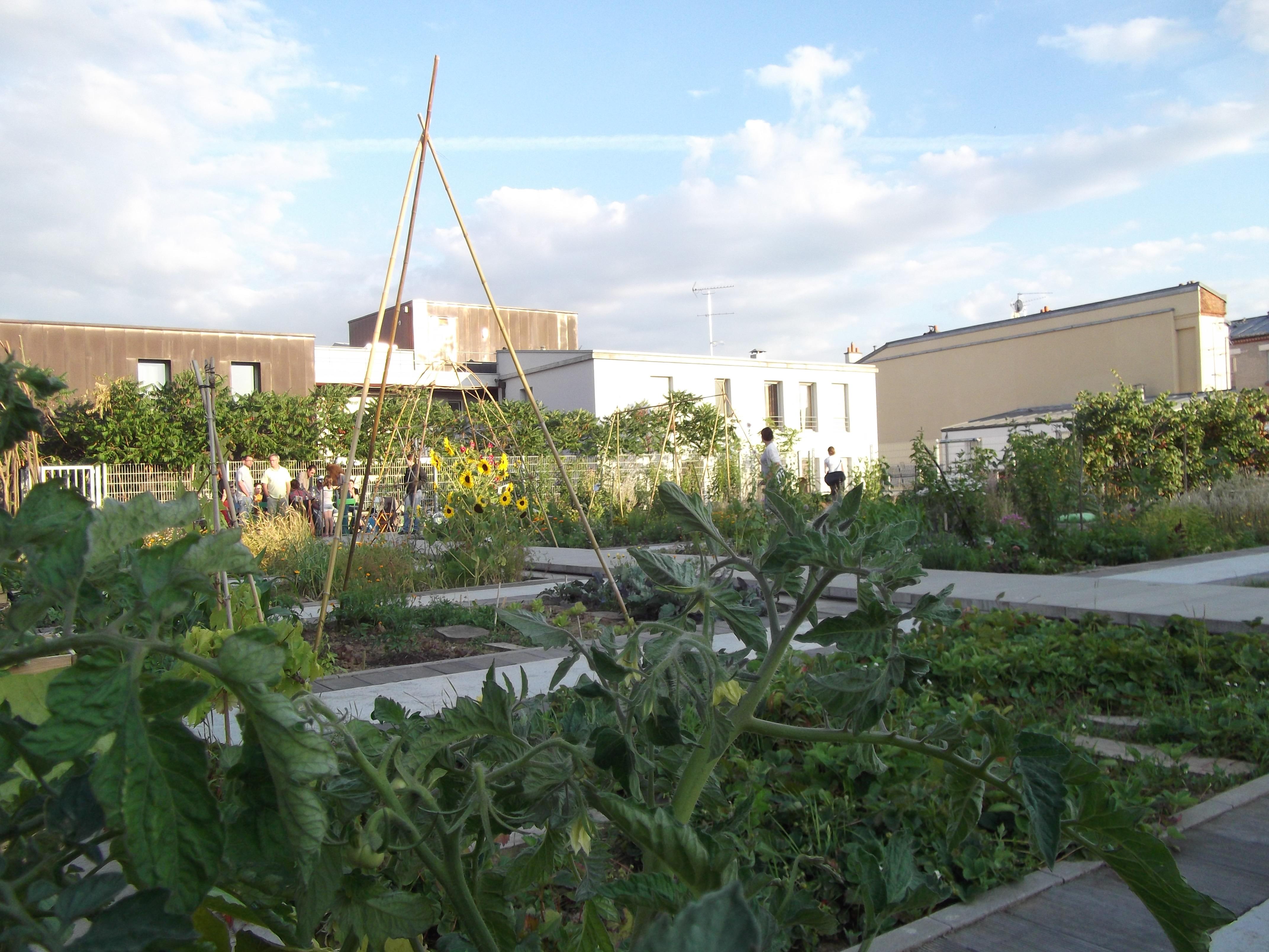 Le jardin sur le toit jardinons ensemble for Jardin sur le toit